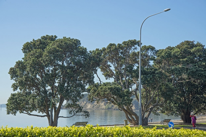 The Best Waterfront Apartment in St Heliers